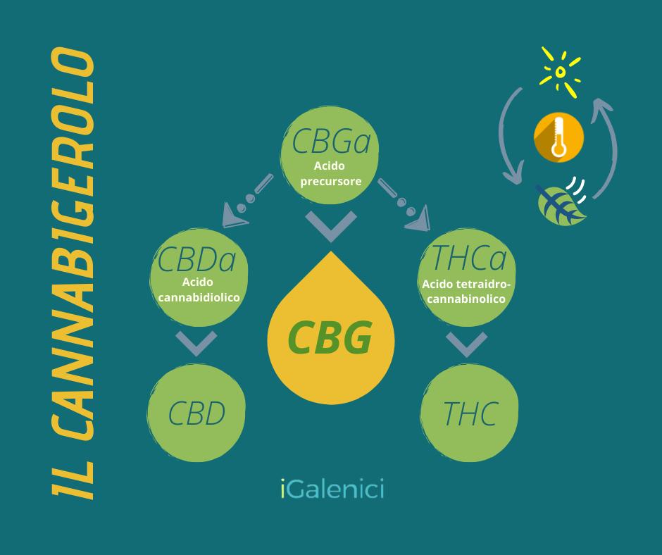 Schema CBGa