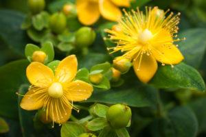 le piante del buon umore